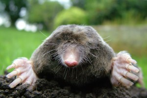 Making Mountains out of Moles: The molar pregnancy